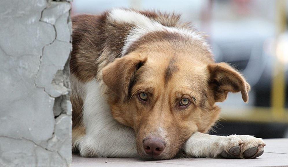 Волгоградцам рассказали, куда обращаться по поводу бездомных собак