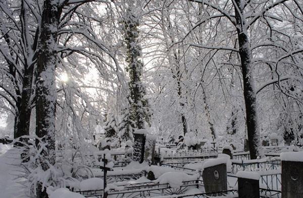 Российские чиновники срубили елку для города на кладбище