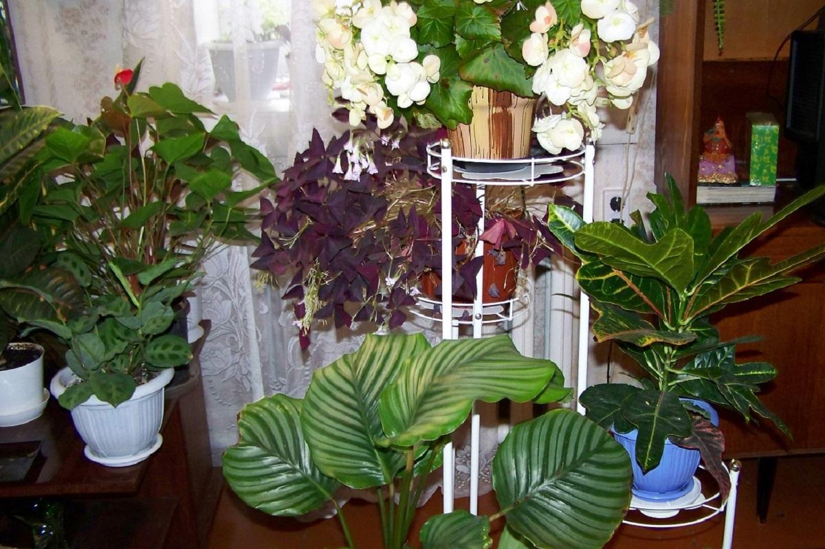 Какие комнатные цветы  уберегут от зависти, злобы и агрессии окружающих