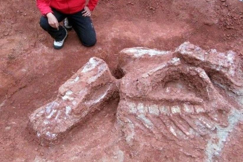 Палеонтологи обнаружили предка человека огромного размера