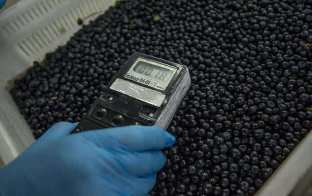 В Москве обнаружено около тонны радиоактивных ягод и грибов