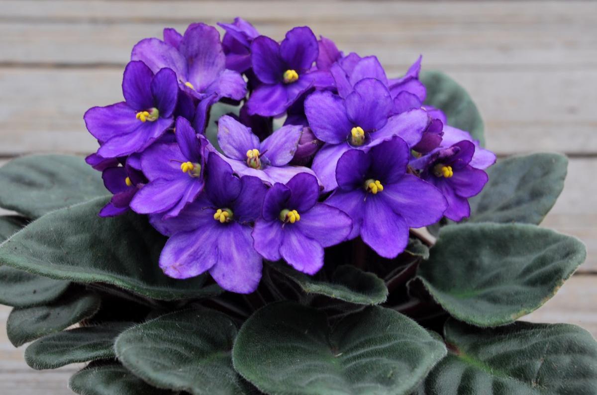 Комнатные цветы, которые уродуют энергетику человека и отнимают жизненные силы