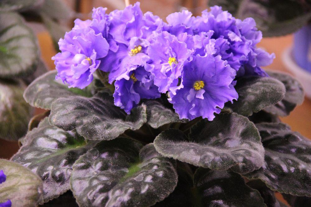 Комнатные цветы, которые нагнетают неудачи и негатив, они несут опасность человеку