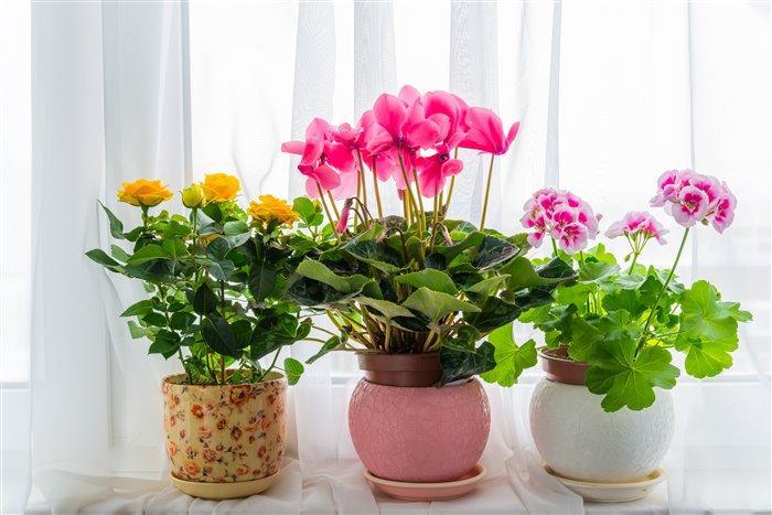Как комнатные цветы влияют на энергетику дома: списки растений, притягивающих счастье, удачу и деньги