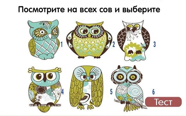 Быстрый тест на характер - выбери сову и узнай все плюсы и минусы своего характера