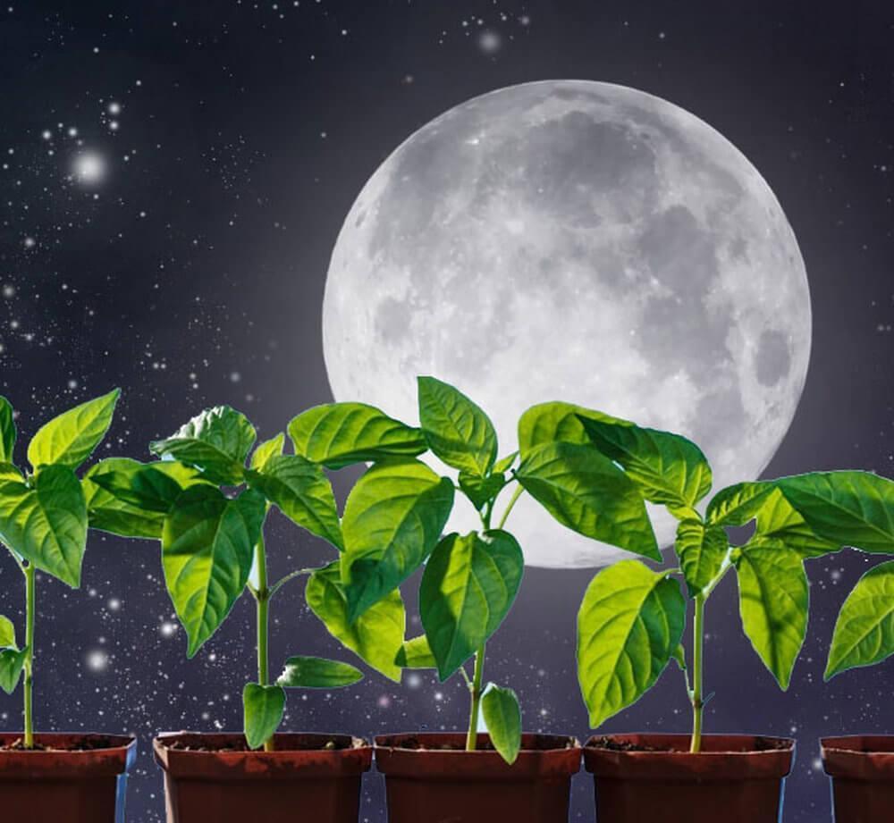Лунный календарь садовода и огородника на февраль-2019: благоприятные и неблагоприятные дни для посадки рассады, таблица высадки семян