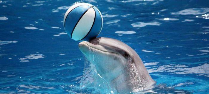 В Сочи футболисты сборной Польши побывали на представлении в дельфинарии