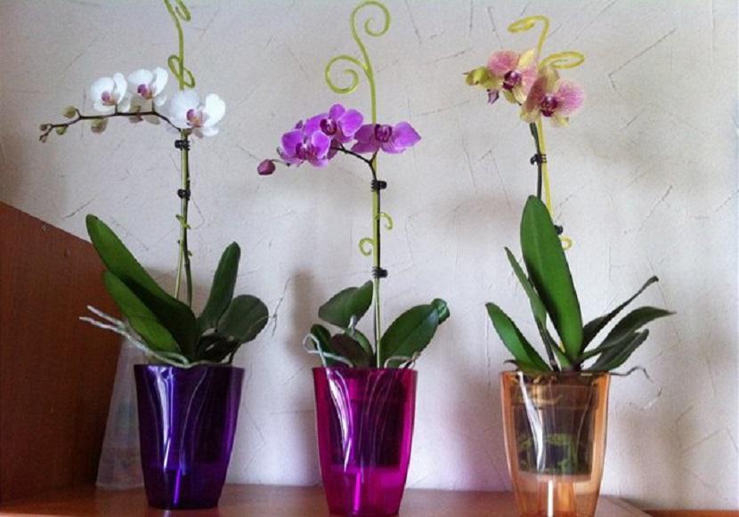 Комнатные цветы, которые снимают стресс и поднимают настроение