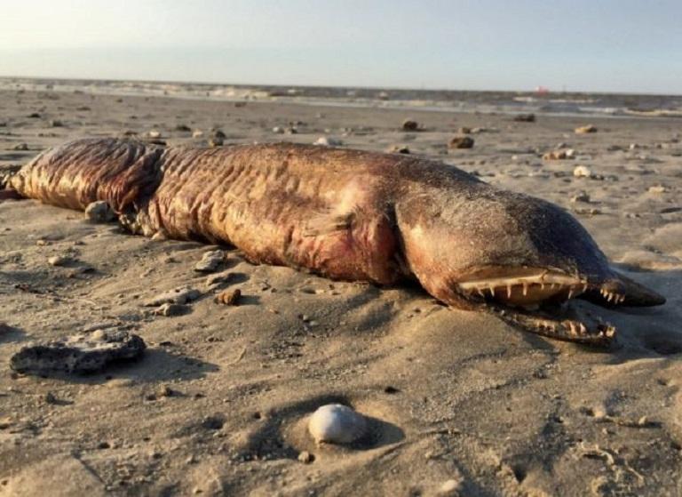 Страшное морское чудовище появилось на пляже Техаса после урагана «Харви»