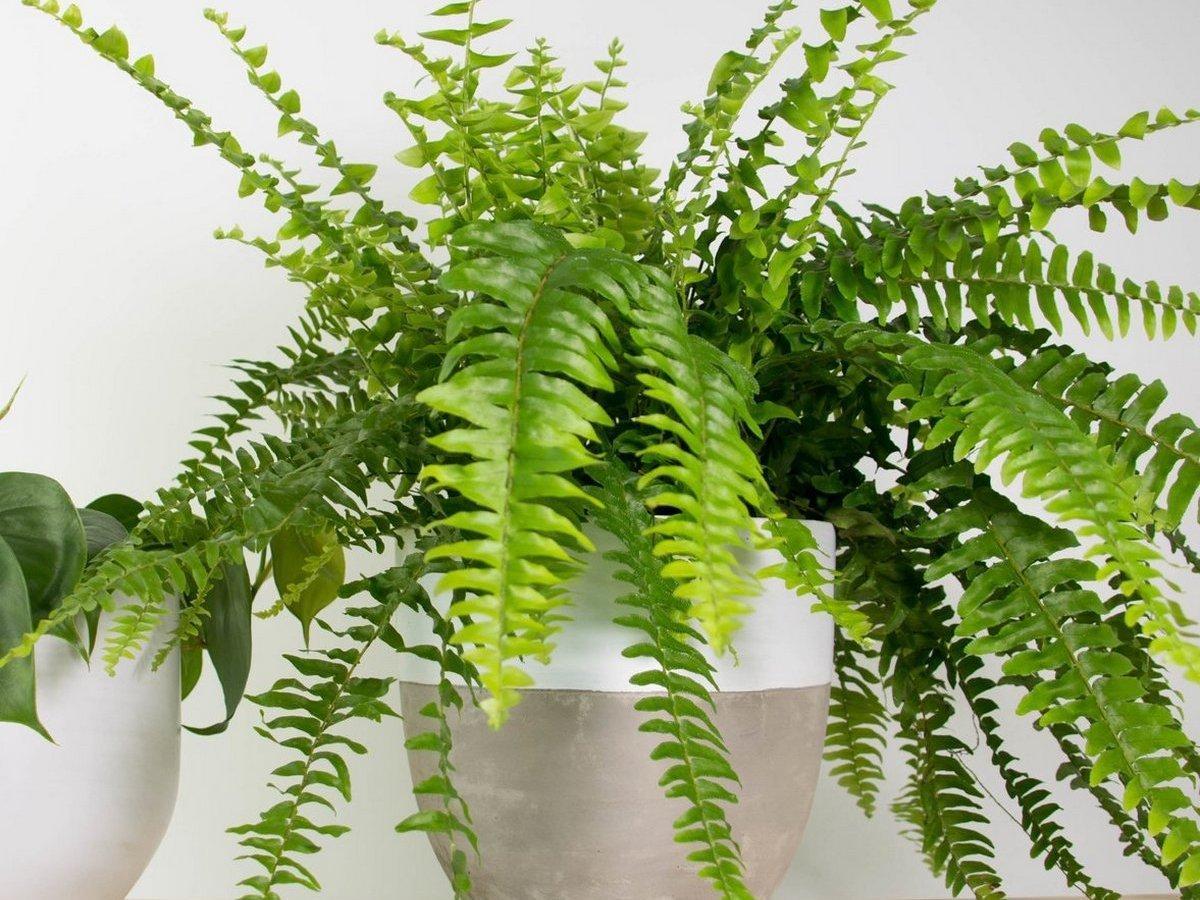 Комнатные цветы, которые мощно защищают от негатива и сглаза