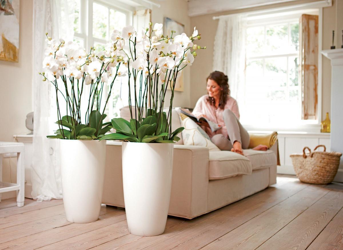 Комнатные цветы и их правильная расстановка, чтобы привлечь в дом благополучие и счастье