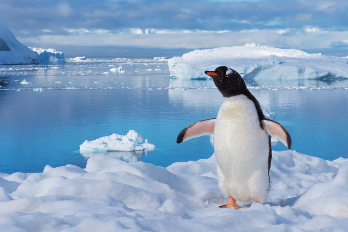 В Антарктиде проживали гигантские существа, учеными озвучили подробности
