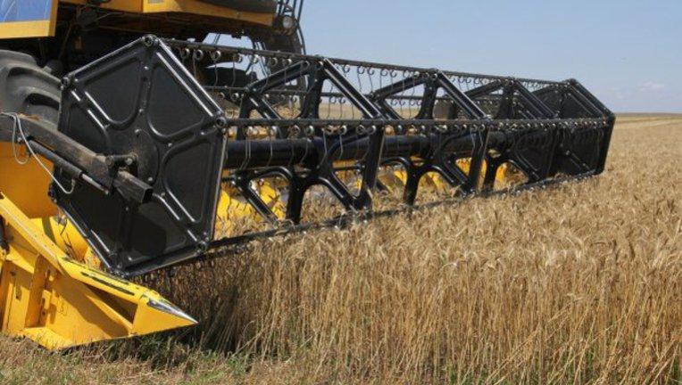 Крым собрали в два раза меньше урожая зерновых, озвучена причина