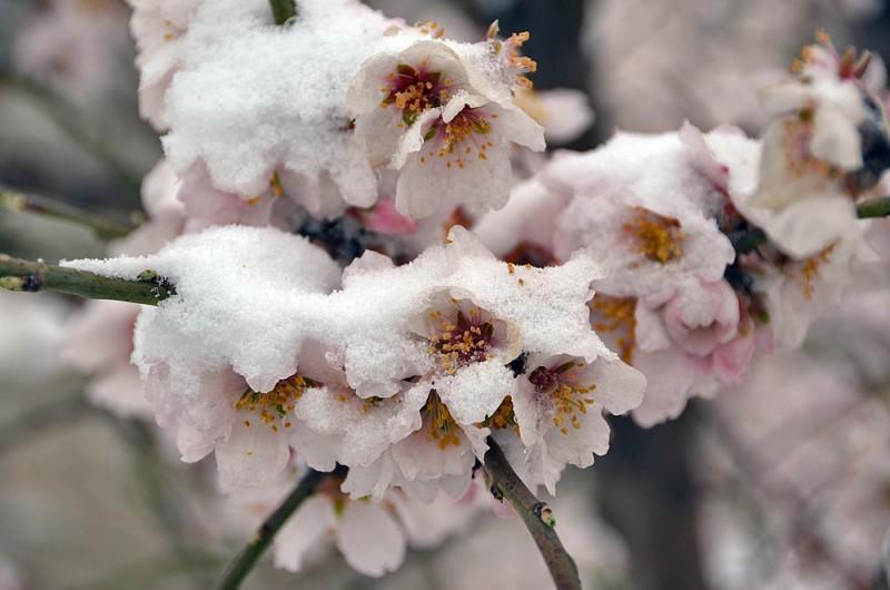 На Дону синоптики прогнозируют заморозки – МЧС распространило экстренное предупреждение