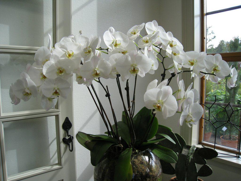 Комнатные цветы, которые мешают человеку быть счастливым