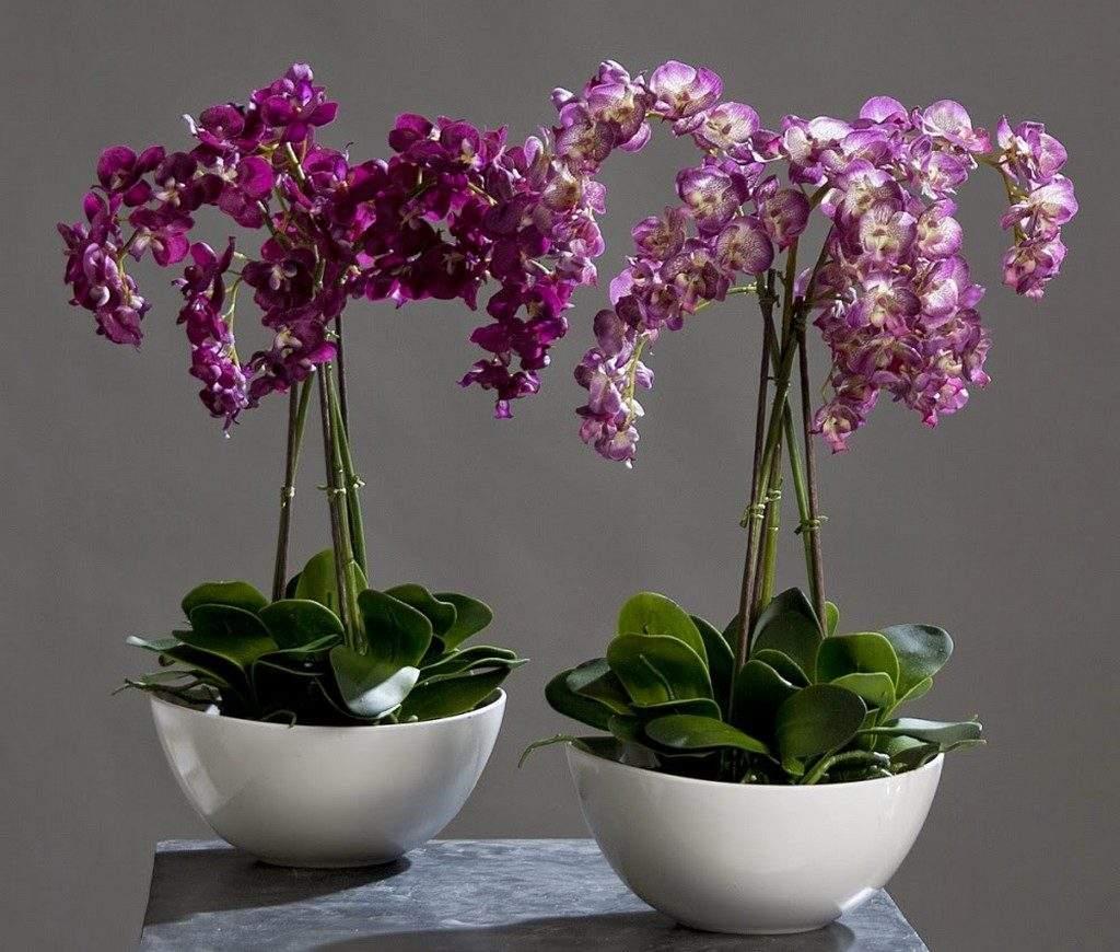 Комнатные цветы, которые улучшают жизнь и приносят добрые перемены