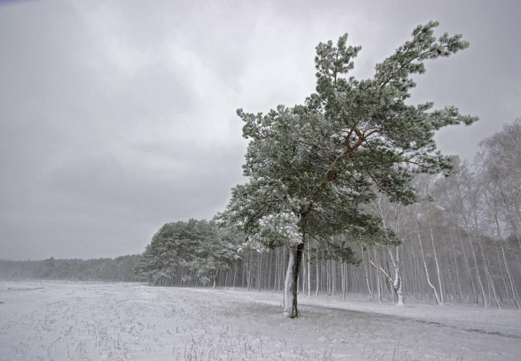 Нарисовать рисунок карандашом зиму и елку и снег также поэтично