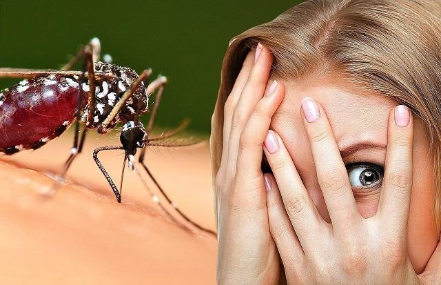 Чью кровь предпочитают комары, поведали эксперты
