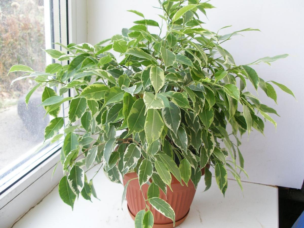 Комнатные цветы невероятно полезные здоровья, они лидеры по очистке воздуха в доме