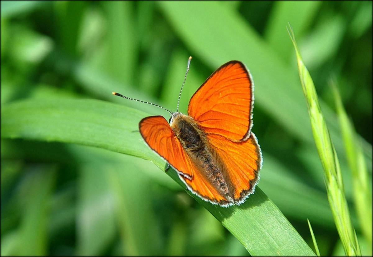 Севприроднадзор прокомментировал сообщения о нашествии бабочек на Севастополь