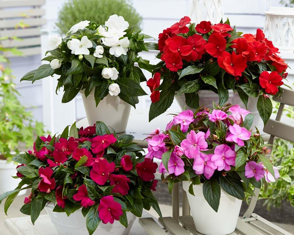 Комнатные цветы, которые спасают в трудных ситуациях