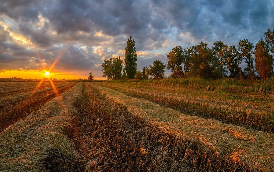 Какое влияние глобальное потепление окажет на Кубань, рассказали ученые