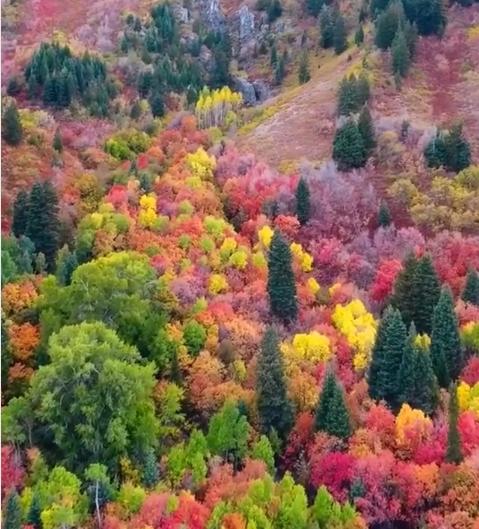 Аномальный цвет леса в США шокировал и восхитил Сеть