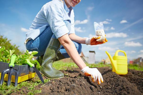 Какую рассаду сажать в апреле 2017 по лунному календарю: таблица посадки семян