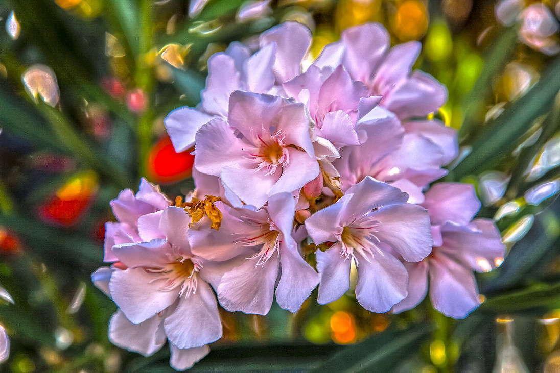 Комнатные цветы, которые нельзя держать дома, они крайне опасны