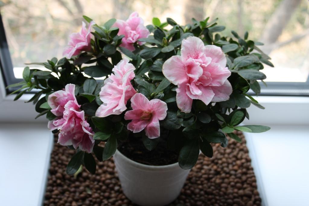 Комнатные цветы, которые снабжают энергией и дарят позитив