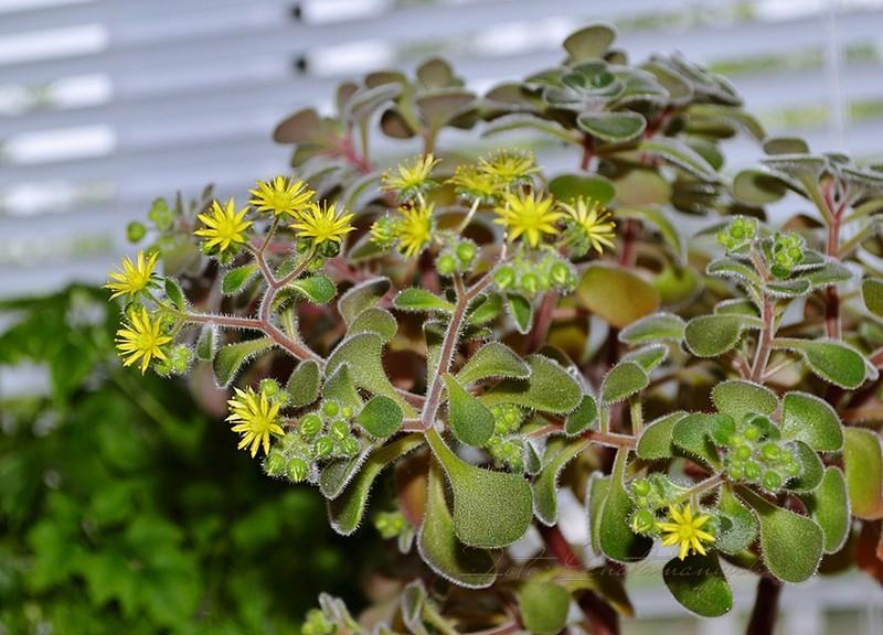 Комнатные цветы, являющиеся благодетелями, они приносят мир и счастье