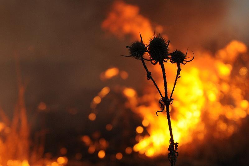 В Волгограде МЧС вновь объявило экстренное предупреждение из-за жары