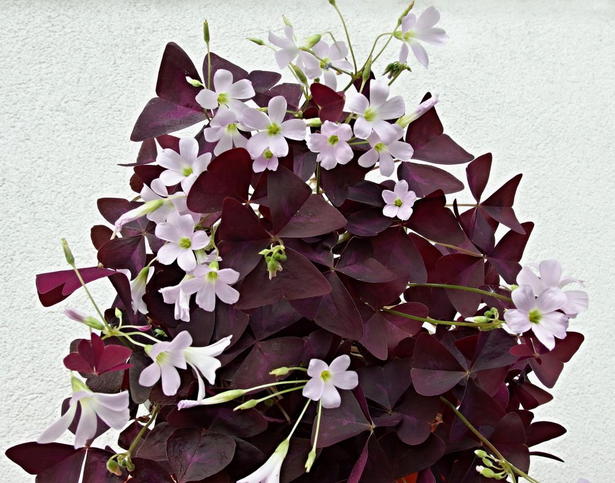 Комнатные цветы, которые повышают сексуальную энергетику