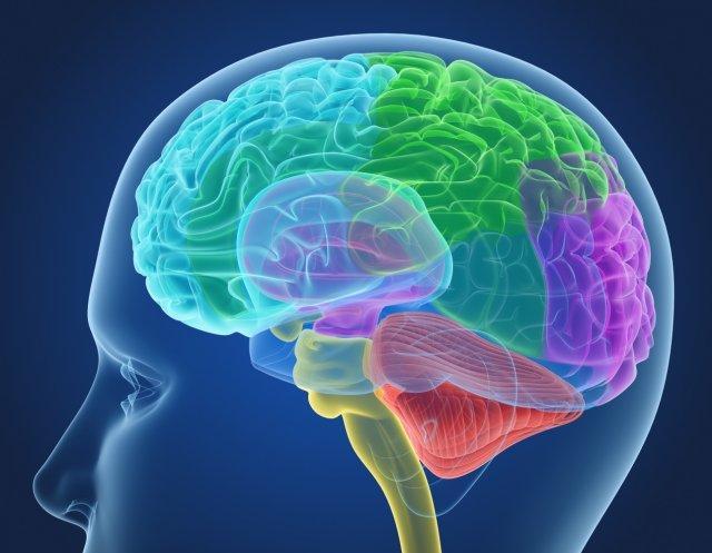 Ученые открыли пять симптомов, по которым можно распознать опухоль головного мозга на ранней стадии