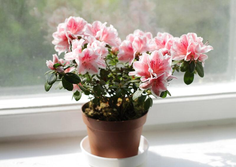 Комнатные цветы, которые изгоняют злых духов из жилища