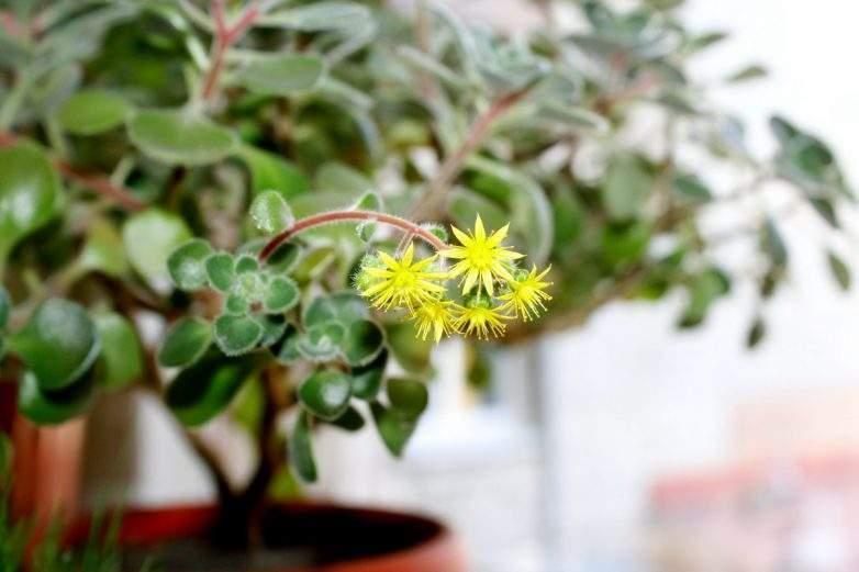 Комнатные цветы, которые делают богаче и приносят достаток