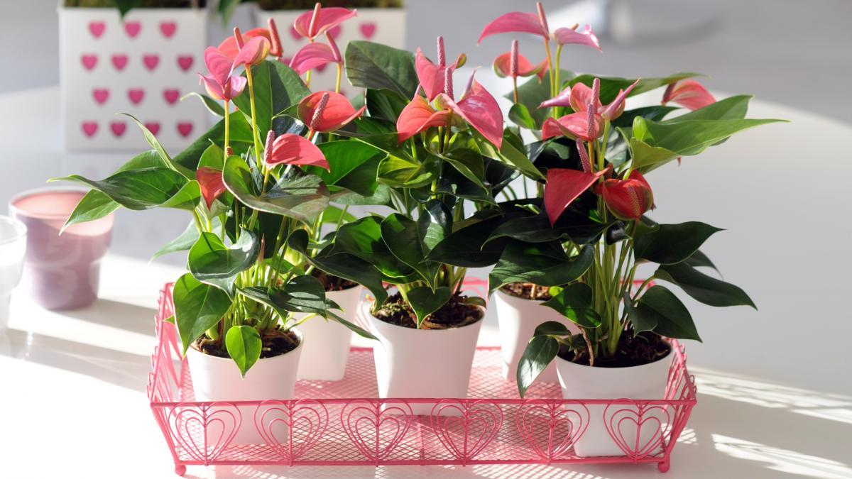 Комнатные цветы, которые наносят тайные удары, их нельзя держать в квартире