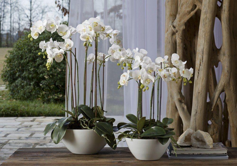 Комнатные цветы, которые меняют жизнь к лучшему