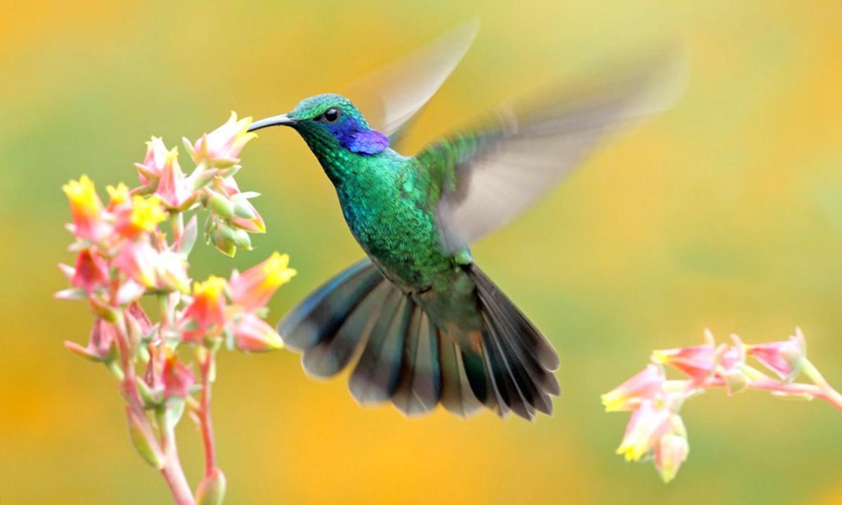 Выяснены лечебные свойства пения птиц— Ученые