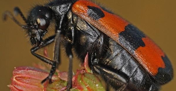 Топ-5 насекомых России, чей укус приводит к летальному исходу