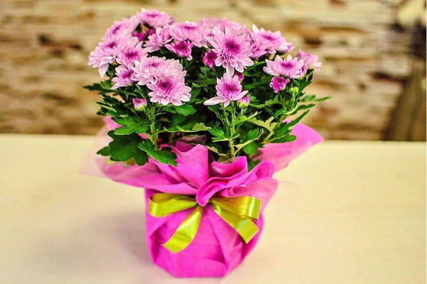 Подаренные комнатные цветы могут таить страшную опасность и наносить удары: на что обратить внимание
