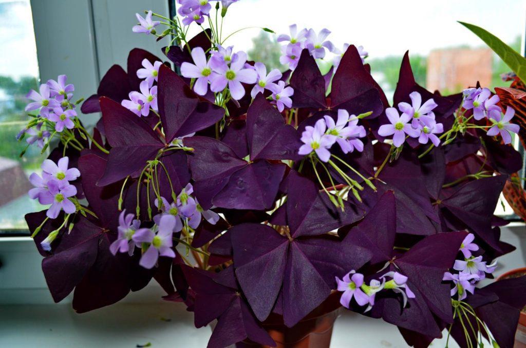 Комнатные цветы, которые меняют жизнь к лучшему, приносят радость и добро