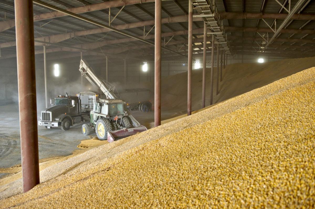 Стало известно о беспрецедентном хищении зерна из федерального фонда