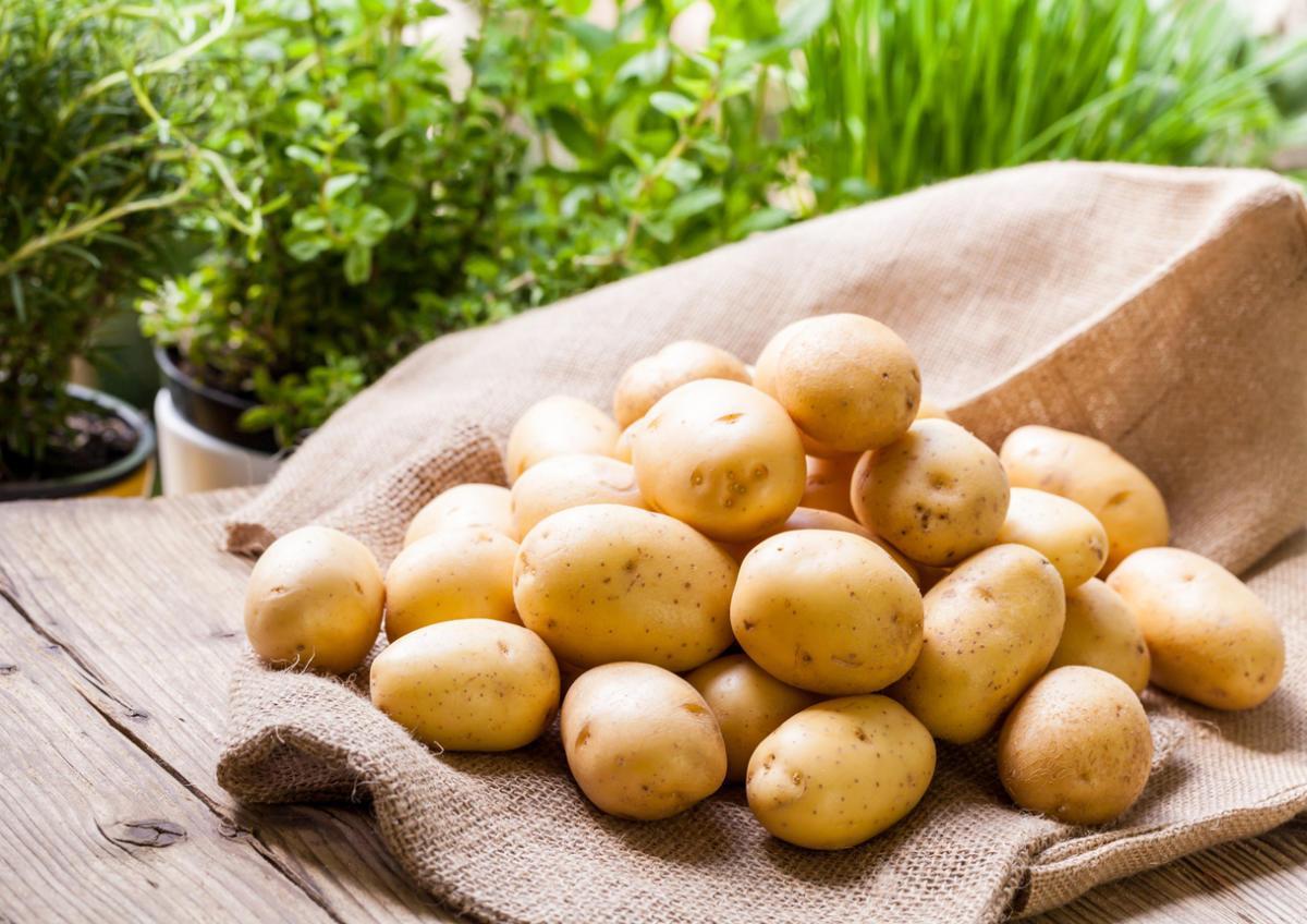 Как получить большой урожая картофеля