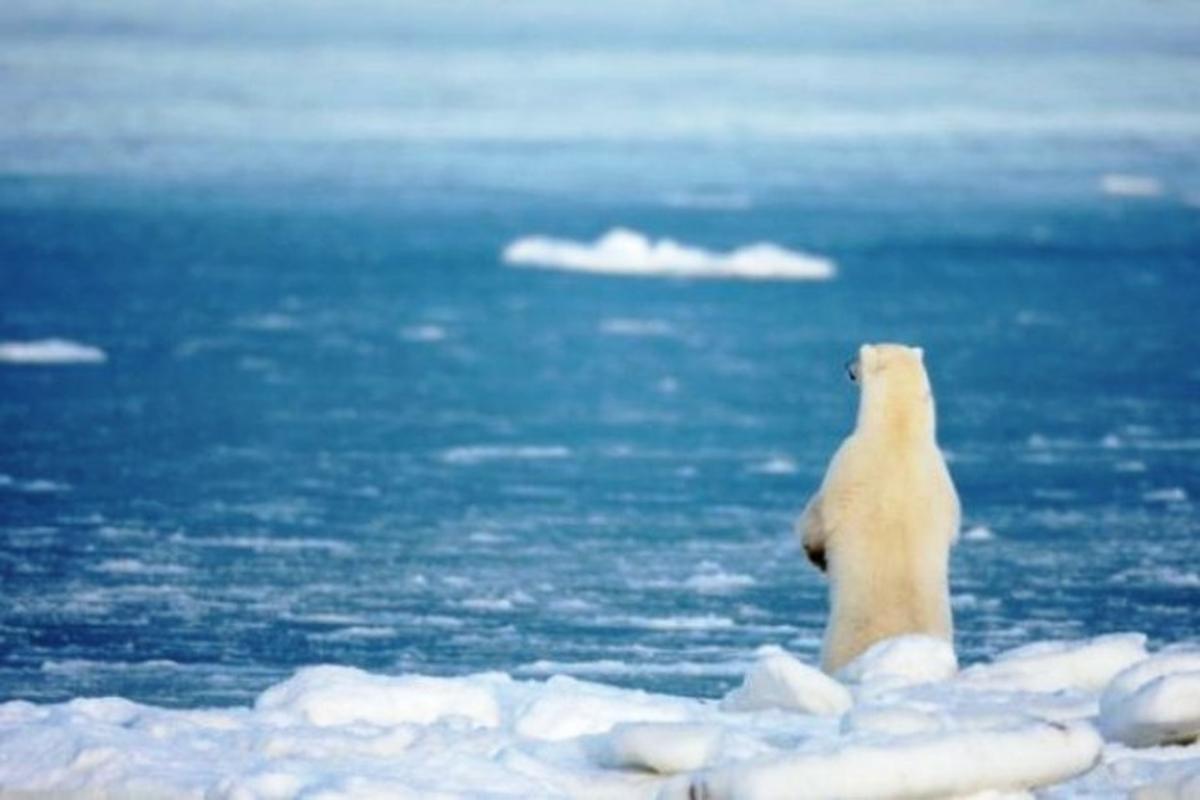 Метеостанция зарегистрировала в Арктике аномально высокую температуру воздуха