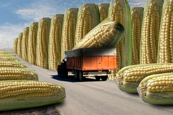 Ученые утверждают: ГМО не вредит здоровью, а даже помогает