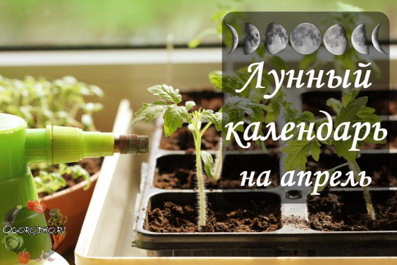 Лунный посевной календарь на 21 - 27 апреля для садоводов и огородников