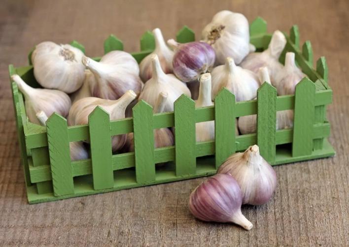 Как правильно хранить чеснок зимой дома: гарантированный и простой способ хранения чеснока до нового урожая