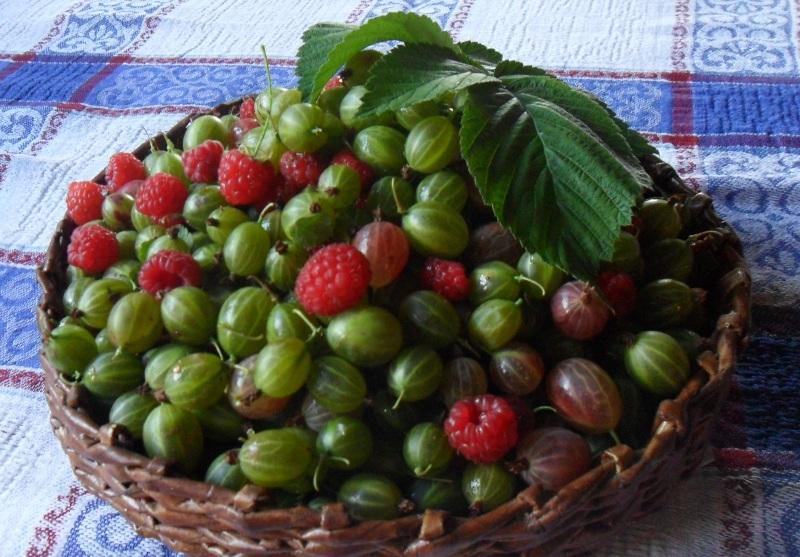 Желе из смородины и малины