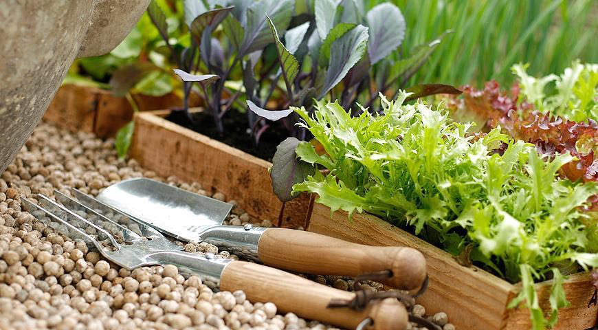 Советы садоводам и огородникам на март 2017 года: посадка семян, сроки выращивания, посевной календарь